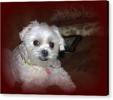 Ruby Resting By Earl's Photography Canvas Print by Earl  Eells a