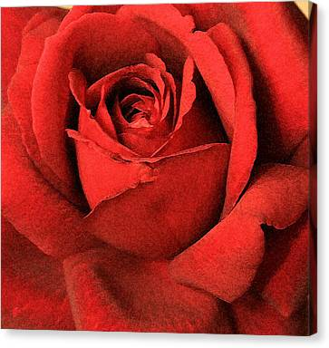Ruby Rose Canvas Print by Marna Edwards Flavell