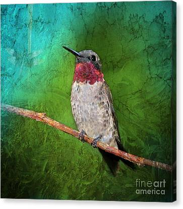 Ruby Throated Hummingbird Canvas Print