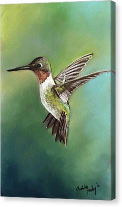 Ruby Throated Hummingbird Canvas Print by Charlotte Yealey