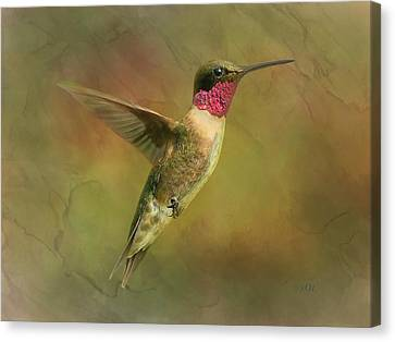 Ruby Throated Hummingbird Inflight Canvas Print by Sandi OReilly