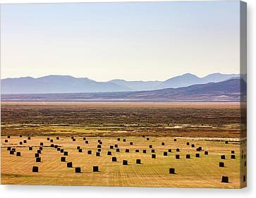Ruby Valley Bales Canvas Print