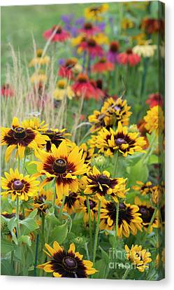 Abstracted Coneflowers Canvas Print - Rudbeckia Sonora  by Tim Gainey