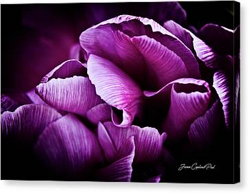 Ruffled Edge Tulips Canvas Print
