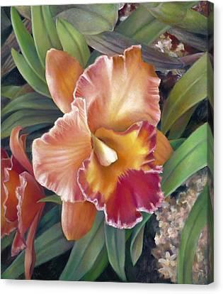 Ruffled Peach Cattleya Orchid Canvas Print by Nancy Tilles