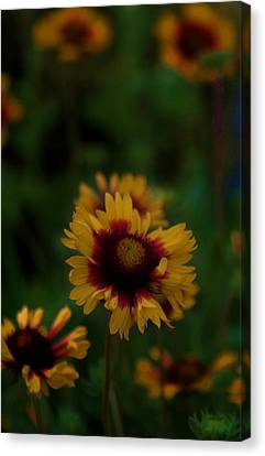 Ruffled Up Canvas Print by Cherie Duran