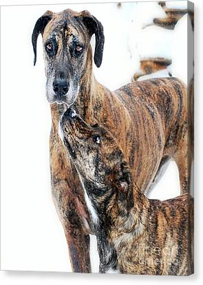 Canvas Print featuring the photograph Rufus And Ava by Lila Fisher-Wenzel