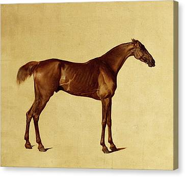 Rufus Canvas Print by George Stubbs