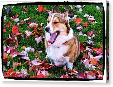 Rukky In Autumn Leaves Canvas Print by Mick Anderson