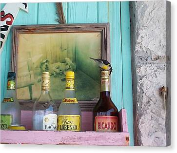 Canvas Print featuring the photograph Rum Shack Bananaquit by Mary-Lee Sanders