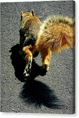 Runaway Fox Squirrel Canvas Print by Beth Akerman