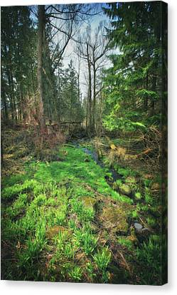 Running Creek In Woods - Spring At Retzer Nature Center Canvas Print by Jennifer Rondinelli Reilly - Fine Art Photography