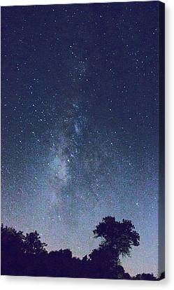Running Dog Tree And Galaxy Canvas Print