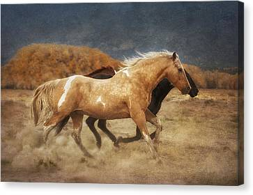 Running Free Canvas Print by Heather Swan