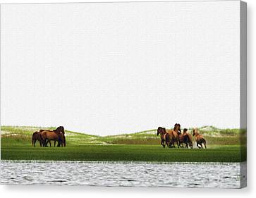 Canvas Print - Running Horses In The Marsh by Dan Friend