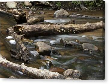 Running River Canvas Print by Kendall Tabor