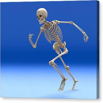 Sprinter Canvas Print - Running Skeleton, Artwork by Roger Harris
