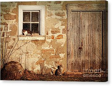 Rural Barn With Cats Laying In The Sun  Canvas Print by Sandra Cunningham