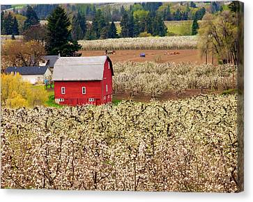 Rural Color Canvas Print by Mike  Dawson