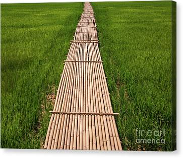 Canvas Print featuring the photograph Rural Green Rice Fields And Bamboo Bridge. by Tosporn Preede