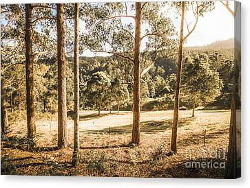 Rural Paddock In Australian Countryside Canvas Print by Jorgo Photography - Wall Art Gallery