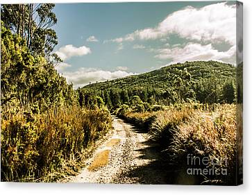 Brush Canvas Print - Rural Paths Out Yonder by Jorgo Photography - Wall Art Gallery