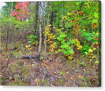 Rural Tyler County Landscape Canvas Print by Terry  Wiley