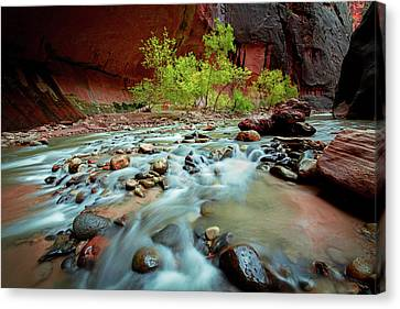 Rush At Narrows Canvas Print