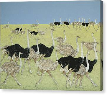 Ostrich Canvas Print - Rush Hour by Pat Scott