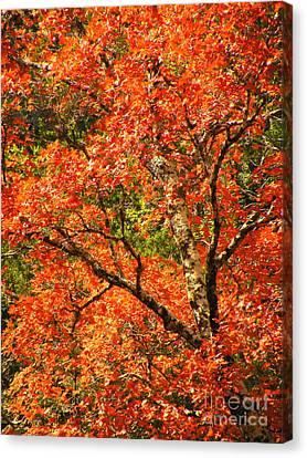 Rush Of Red Canvas Print by Joe Jake Pratt