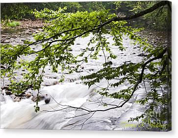 Rushing River Canvas Print by Thomas R Fletcher