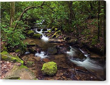 Rushing Stream Through Appalachian Canvas Print by Panoramic Images