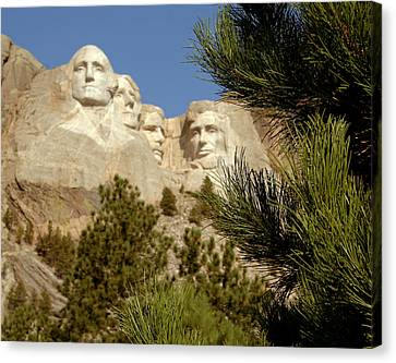 Rushmore Pine Needles Canvas Print by Mike Oistad