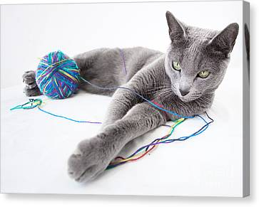 Paw Canvas Print - Russian Blue by Nailia Schwarz