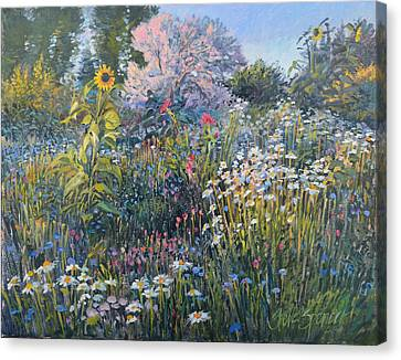Canvas Print featuring the painting Russian Olive Among Daisies by Steve Spencer