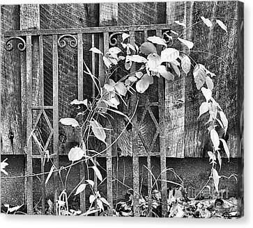 Rusted Wrought Iron And Leaves Canvas Print