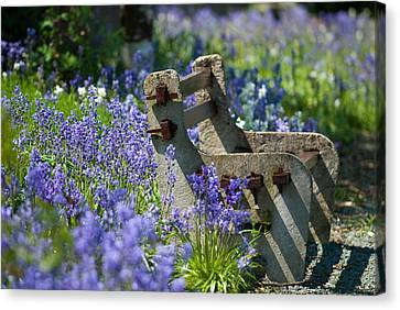 Rustic Bench Canvas Print by Amanda Elwell