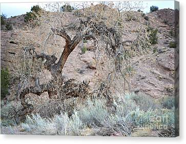 Canvas Print featuring the photograph Rustic Desert Tree by Andrea Hazel Ihlefeld