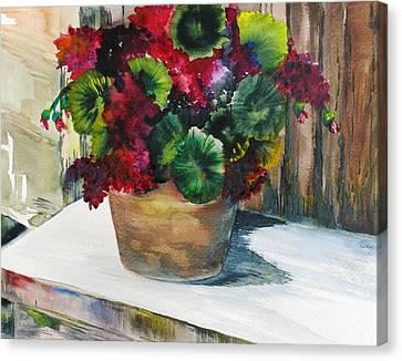 Rustic Geraniums Canvas Print by Arry Murphey