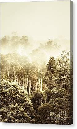 Rustic Tasmanian Rural Forest Canvas Print