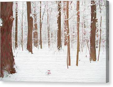 Rustic Winter Forest Canvas Print by Dan Sproul