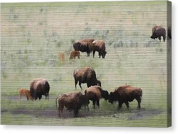Buffalo Canvas Print - Rustic Yellowstone Bison Herd by Dan Sproul