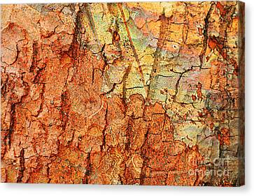 Rusty Bark Abstract Canvas Print by Carol Groenen