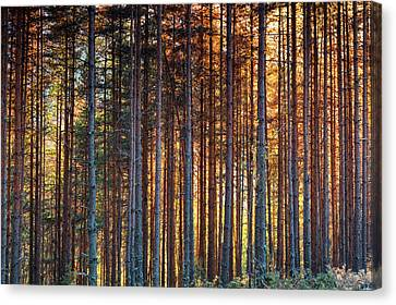 Rusy Forest Canvas Print by Evgeni Dinev