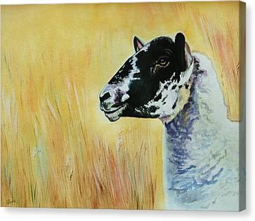 Rutland Sheep  Canvas Print by Lucy Deane