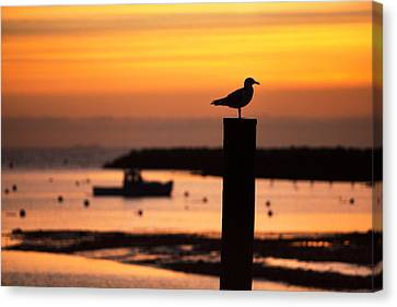 Rye Harbor Sunrise Canvas Print by Eric Gendron