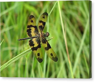 Ryothemis Dragonfly Canvas Print