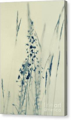 Land Shapes 37 Canvas Print by Priska Wettstein