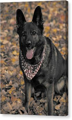 Saber In Autumn Canvas Print