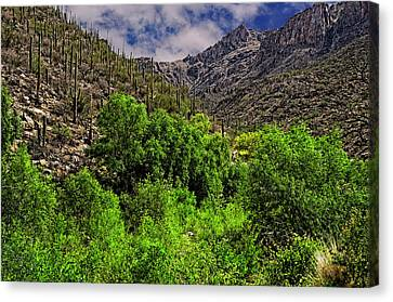 Canvas Print featuring the photograph Sabino Canyon H33 by Mark Myhaver